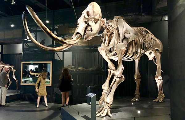 Naturalis, The Netherlands